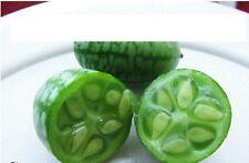 35x Mini Gurken Samen Hingucker Pflanze Rarität Gemüse Gurke Garten Frisch #40