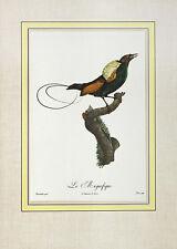 Jacques barraband le Magnifique póster son impresiones artísticas imagen 54x39cm-sin gastos de envío