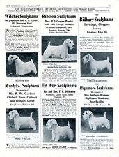 SEALYHAM TERRIER DOG BREED KENNEL ADVERT PRINT PAGE BREEDERS CLUB OUR DOGS 1947