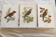 "Lot Of 3 Antique Signed ""E T"" Bird Lithograph Prints Lot"