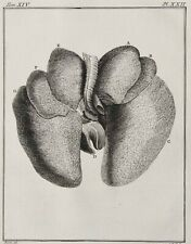 1771 Antique anatomy copper engraving of HEART and LUNGS. 249 years old print