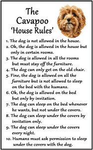 Cavapoo 'House Rules' Flexible Magnet. Sticks to any flat metal surface.