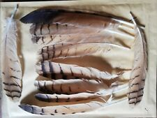 10 owl Feathers , Arts Crafts, Fly Tying, Native American, Millinery
