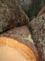 1,1 kg Zirbenspäne Zirbenflocken Zirbe Zirbelkiefer Zirbenholz Duft Kissen
