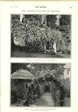 1902 Rosebank Porch Mr Mawley Canon Normans House Berkhamsted