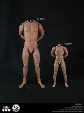 """16"""" COOMODEL 1:4 Scale Male Muscular Body Action Figue F/Man Head Sculpt Model"""