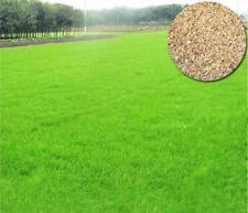 100Pcs lawn grass seeds (Zoysia Tenuifolia) Fast grow Grass Seed Perennial