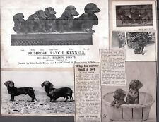 Vintage Photograph Cocker Spaniel Puppy Dachshund Dogs London England Old Photo