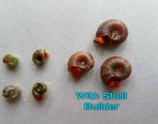 Live Snail Supplement With COLOR BOOST! For Ranshorn, Trapdoor, Apple, Assassin