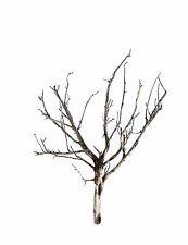 "Miniature Trees ~ 20 2""-5"" SAGEBRUSH MODEL RAILROAD TREE ARMATURES DEAD FALLS"