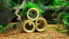Moss ball on 3 bamboo tubes, natural aquarium decoration for shrimp and crayfish