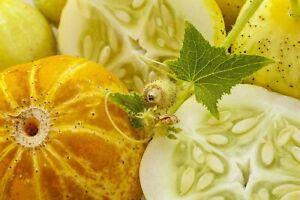 12 Graines de Concombre Citron - légumes ancien potager - méthode BIO