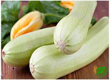 Calabacín Blanco Bianca Di Trieste (20 semillas) seeds - Calabacin
