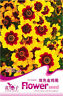 50 Seeds/Pack Double Colors Coreopsis Seed Coreopsis Original Package A096