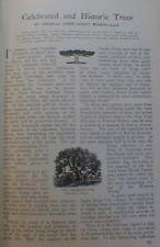 Historic Trees Tree 1910 Raising the USS Maine