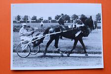 Foto München Daglfing 1953/80s Traber Sulky Pferd Criterium 4-jähr Quonium Sport
