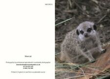 Greeting cards Meercat
