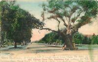 1908 Orange Grove Avenue Pasadena California Newman postcard 8499