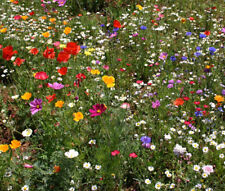 WILDFLOWER MIX CASCADE KALEIDOSCOPE - 1 Oz Bulk Seeds