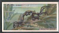 Skelaton Ghost Shrimp c90 Y/O Trade Ad Card