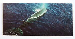 merveilles du monde nestle 450 les animaux migrateurs le cachalot