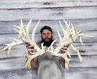 "Monster Freak 342"" Whitetail Cut Antler 49pt Horn Deer Mount Taxidermy Man Cave"