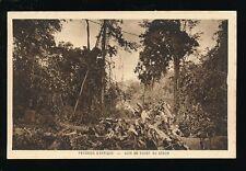 West Africa Gabon Paysages d' Afrique Foret c1910/20s? PPC