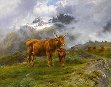 Bonheur Rosa Highland Cattle Print 11 x 14    #5243