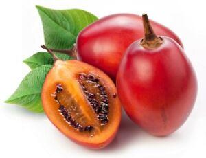 10+ Red Tamarillo Seeds ~Solanum becateum~ Cyphomandra becatea ~ Tree Tomato