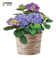 Aufkleber Wandsticker Fensteraufkleber Blume Topf Violet Blüten Pflanzen Blumen