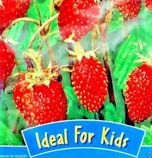 ALPINE STRAWBERRY - 170 HIGH QUALITY FRUIT SEEDS - IDEAL FOR KIDS