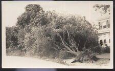 Postcard Size REAL PHOTO MT CARROLL  3 views Tornado Damage 1930's