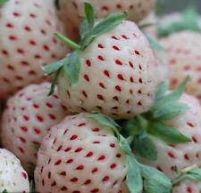 200 White Strawberry Seeds Strawberries Seed Organic S006
