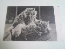 Vintage Raphael Tuck Postcard Fluffy Cat+The Cutest Kittens Franked 1905 §A540