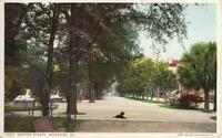 Savannah GA Gaston Street View & Black Dog 1910s Antique Postcard 26687