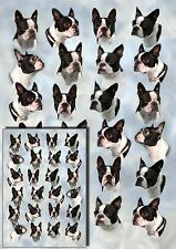 Boston Terrier Dog Wrapping Paper by Starprint - Visit our shop