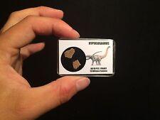 Coquille d'oeuf de dinosaure Hypselosaurus Fossile / Eggshell dinosaur!