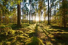 VLIES FOTOTAPETE Tapeten Rollen Wald Wandbilder XXL Bäume Natur Sonne 560