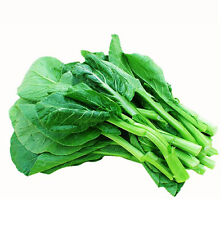 Choy Sum Seeds 200 Seed Brassica Campestris Chinese Flowering Cabbage Seeds C075