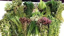 20 LIVE Tropical  AQUARIUM Aquatic Plants, for tropical FISH TANK