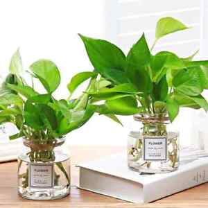 Contemporary high-choke glass plant vase crystal clear indoor/outdoor desktop