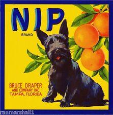 Tampa Florida Nip Scottish Terrier Dog Orange Citrus Fruit Crate Label Art Print