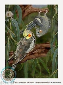 © ART Quarrion Cockatiel Weiro Parrot BIRD wildlife Original artist print by Di