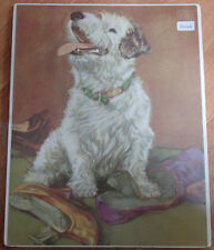 1930'S Original Matted Print Of Sealyham Terrier Dog By Diana Thorne