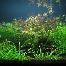 Aquarium Tank Water Plant Seeds Mixed Grass Aquatic Indoor Decorations 1000Pcs