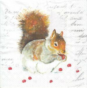 4 Lunch Papier Servietten Napkins (F13.21) Eichhörnchen