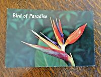 Vintage Postcard Hawaii Hawaiian Bird of Paradise Unposted 1950s Flower Color