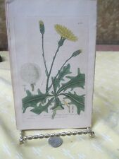 Vintage Print,LONG ROOTED CAT,British Flowering Plants,W.Baxter,1840