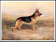 GERMAN SHEPHERD DOG IN RURAL SETTING LOVELY VINTAGE STYLE DOG ART PRINT POSTER