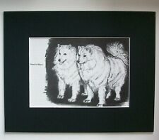 Samoyed Brace Dog Print Gladys Emerson Cook Bookplate 1962 8x10 Matted Adorable